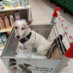 Alemanno al supermercato