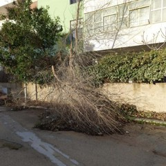 caduta alberi Cerignola foto