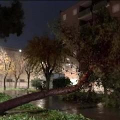 Caduta albero via Milano