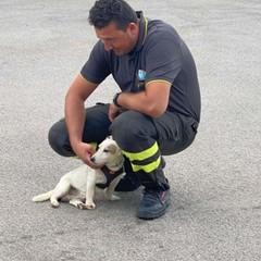 Vigili del fuoco dopo il salvataggio