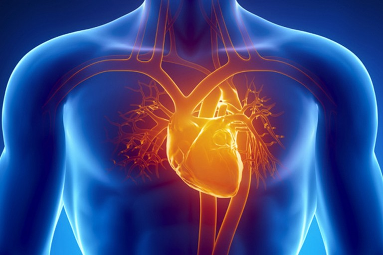 Apparato cardio vascolare