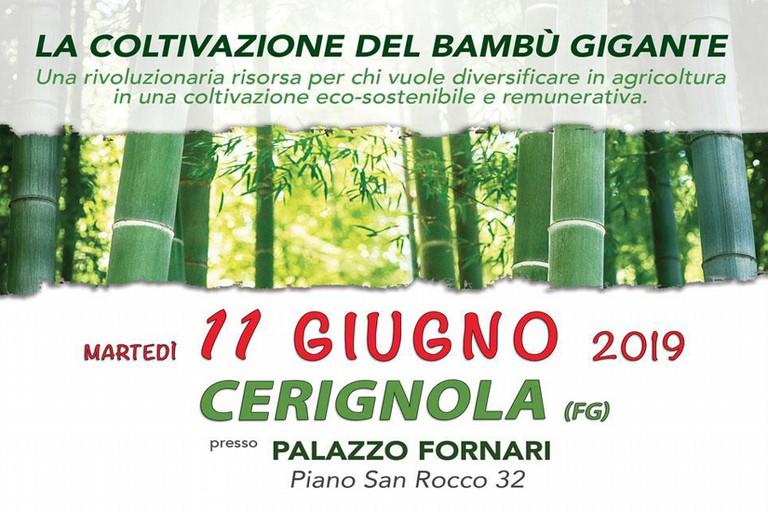 Coltivazione Bambù