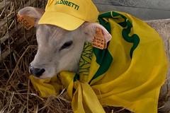 Predatori in pascoli e stalle, l'allarme della Coldiretti Puglia