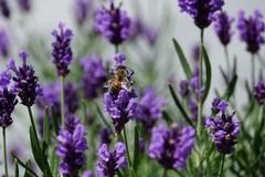 Il Club per l'Unesco di Cerignola ha celebrato la Giornata della biodiversità