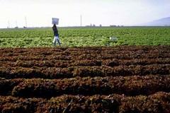 Morti per afa, le associazioni degli agricoltori chiedono attenzione per tutti i settori