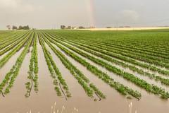 """Agricoltura distrutta dalla primavera """"pazza"""""""