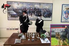 Arrestati a Foggia padre e figlio, detenevano oltre 2.500 dosi di marijuana