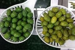Puglia: La truffa delle olive verniciate con solfato rame