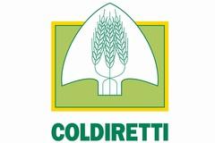 Manovra: Coldiretti Puglia, per privatizzazione 5 mln metri quadrati, terreni e fondi del Demanio disponibili.