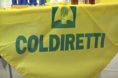 56 eventi estremi in Puglia tagliano raccolti