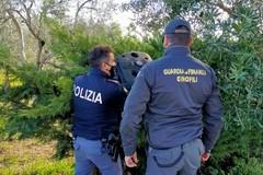 Marijuana in casa, un arresto a Cerignola