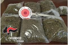Operazione antidroga, un arresto a Cerignola