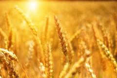 Sole batte glifosfato. Aumenta il consumo di pasta italiana durante la fase 2