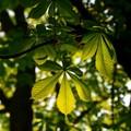 """Piantare alberi in città, l'impegno del """"Gruppo Scout Cerignola 2"""""""