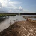 """Puglia, estate disastrosa per l'agricoltura. La CIA """"Stato di calamità"""""""