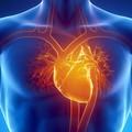 Prevenzione cardio vascolare.  Chi , come , quando