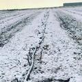 Maltempo, nevica in Puglia su uliveti e mandorli in fiore
