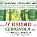 La Coltivazione del Bambù Ggigante. Convegno della Vivai OnlyMoso a Palazzo Fornari