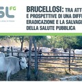 Brucellosi: epidemiologia e prevenzione
