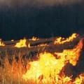 Coldiretti Puglia: Con legge bruciatura stoppie meno lavorazioni in aree a grano