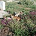Violenza ai danni di tre cani, la mamma con due cuccioli