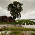Maltempo: pomodori affogati a Foggia