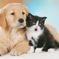 Botti di Capodanno, alcuni consigli utili per i possessori di animali domestici