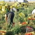 Caporalato: Arriva progetto diritti e lavoro migranti