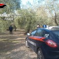 Sei arresti e una denuncia per furto di olive, ricettazione e resistenza a pubblico ufficiale.