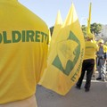 Olio taroccato, Coldiretti Puglia apprezza operato NAS