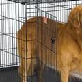 Gara per la cura e il mantenimento dei cani randagi nel Comune di Cerignola