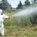 Assessore Mininni: pianificazione interventi di disinfestazione e sanificazione.