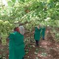 Puglia verso gli 8milioni e mezzo di ettolitri di vino nel 2020