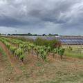 Terra mangiata da impianti fotovoltaici (37%), subito legge contro pannelli selvaggi