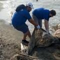 I volontari della Fratres di Zapponeta puliscono la spiaggia