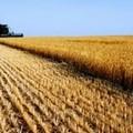 """Istat:  """"Meno aziende agricole, ma più grandi """""""