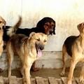 Stornara: La Prima colletta alimentare per cani