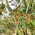 CIA Puglia chiede lo stato di emergenza a causa della eccezionale siccità
