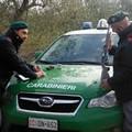 FOGGIA, Carabinieri Forestali, controlli in materia Venatoria – Scattano le prime sanzioni e denunce.