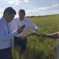 Grano: Coldiretti Puglia, a 30 gg dalla raccolta sopralluogo in campo per dare corso all'accordo con i pastai