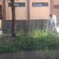 Assessore Mininni: manutenzione del verde negli Istituti Scolastici.