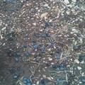 Forti raffiche di vento spazzano via olive, enormi danni