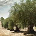 Covid,  in Puglia per hobbisti agricoli possibile spostarsi fuori dal proprio comune