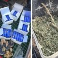 Sette chili di marijuana e ordigni artigianali a Foggia