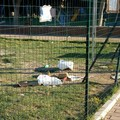 Parco Baden Powell, ricettacolo di rifiuti