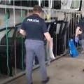 Sequestrati 1500 pezzi di ricambio auto a Cerignola