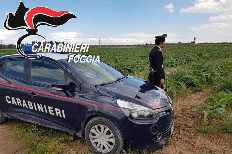 Carabinieri nei fondi agricoli