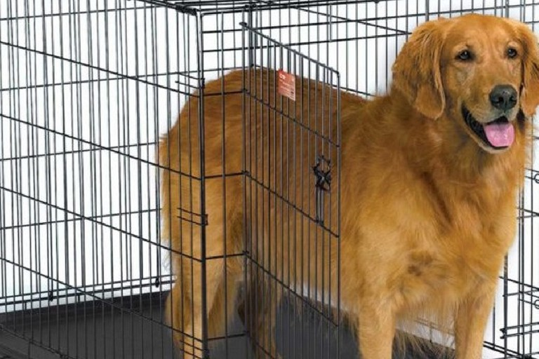 Cura e mantenimento cani randagi Cerignola