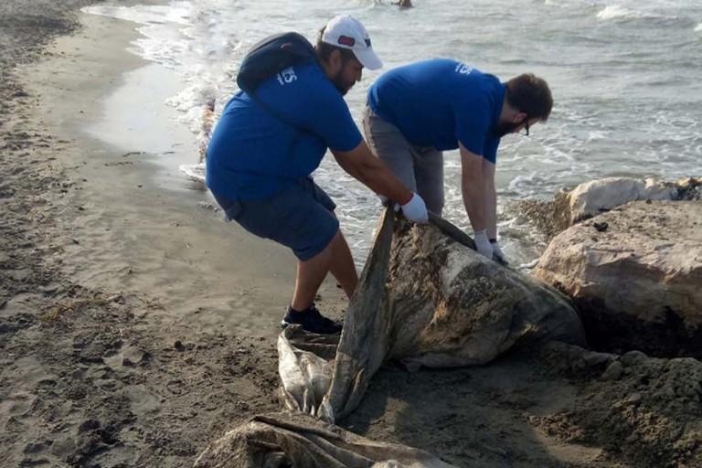 Fratres pulisce la spiaggia di Zapponeta