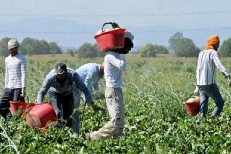 Immigrati nei campi